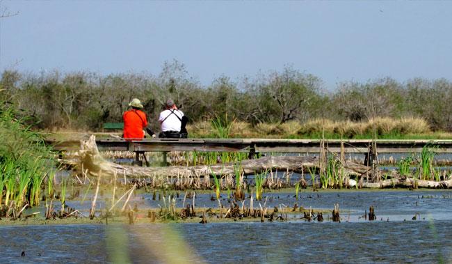 Estero Llano Grande State Park of Weslaco